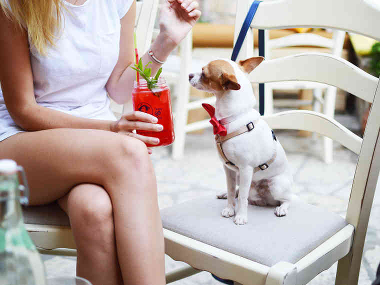 Cocktail, Hund,